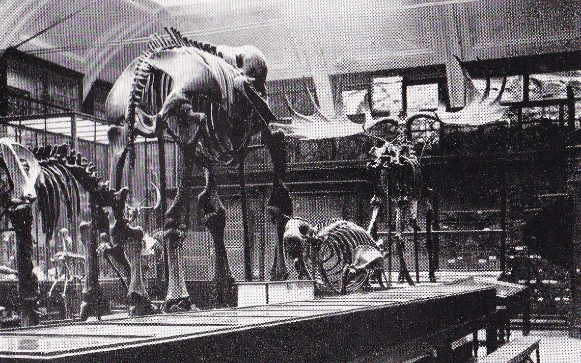 A picture of a display of rare skeletons: the body of the elephant had been bought from Wombwell's menagerie when it came to Leeds.